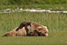 <3 animals / by Crystal Lumpkin