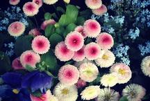 lovely / by usagi nomedama