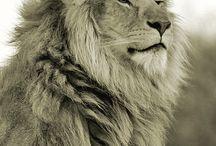 Lions for a Leo / by kaynara jewellery