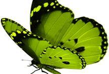 butterflies / by Miriam Tate