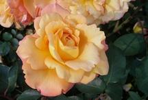 Bloom and Blossom / by Elizabeth Shayne