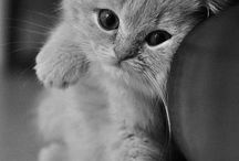 Cats and other felines / by Daniela: a bit of everything