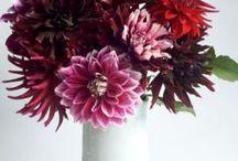 Bouquets / by Deb Venman