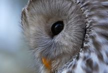 Owls / What it says. / by Christine Licker