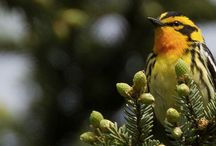 birds and nature / by Stephanie Beilke