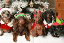 Holiday Dog Photos / by Fidose of Reality