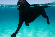 {GROUP} Wet 'n Water Dogs / by We Love Dogs ♥ Guide Dogs Worldwide ♥