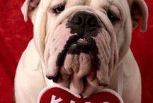 Bulldog love!! / by Lisa Mendicino