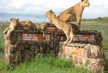 Nairobi, Kenya / Things to do in and around Nairobi, Kenya / by City Lodge