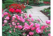Rose Garden / by Cedar Valley Arboretum