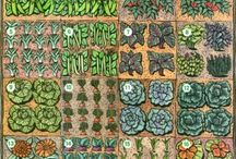 Vegetable Garden Plans / by Bonnie Senese