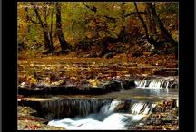 Autumn / by BVS Books