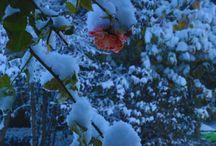 La neige est arrivée à Beaune... / Beaune a revêtu son beau manteau blanc! Beaune donned its beautiful white blanket! / by Hôtel Le Cep - Beaune
