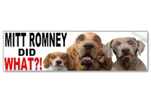 Mitt Romney Bumper stickers / My favorite Mitt Romney car bumperstickers / by Republican 2012