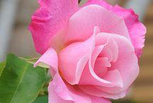 flowers / by linda robertson