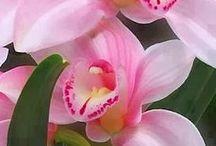 Flowers / by Zoe Archer