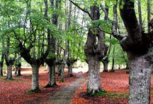 bosques vascos / by Joseba Villate