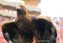 War eagle / by Cristina Almendarez
