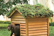 gardening / by Cassie Woodall