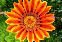 Macro Flowers / by Art, Love and Joy