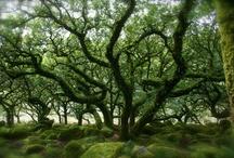 Trees / by Kat Jones