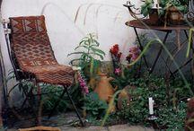 Plant Life / House plant search commences... / by Brett Johnson