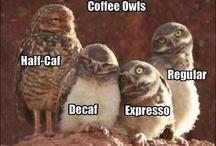 Owls / by Ali Siweckyj
