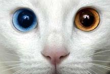 Eyes have it / Eyes talk / by Jerri Oyama
