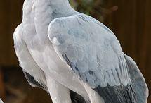 Birds of Prey / by Rochelle G