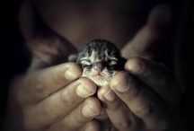Animal shelter / by Dreas Pix