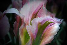La Fleurs / by Valorie Phillips-Keeton