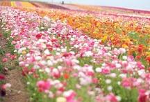 flowers / by Sherrie Petersen