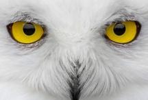 Owls / by Liz Miller - Artful Endeavors