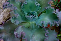 Gardening / by Wanda Tehan