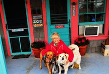 Dog-Friendly Travel / Tips and travel advice from pet parents and professional travel writers Paris Permenter and John Bigley. / by DogTipper.com