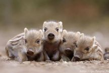 Pig Love / by Melissa Sims