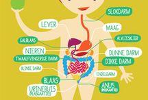 005a | Menselijk lichaam / by Andre Gilara