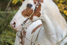 Horses / by Mary S (: