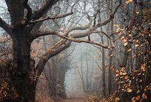 pathways / by Amanda Mayer