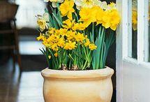 Gardening Ideas / by Laura Wells