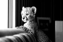 animals / by Alexsa Squire