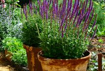 Container Gardening / Container inspiration. / by Susan Kraner