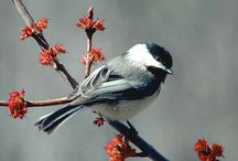 BIRDS  / Nature's beauty / by Margie Anderson