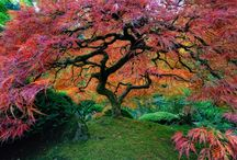 Ultimate tree images / by Four Winds