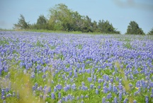 Round Top....I Miss you, I left my heart in Texas / by Jeanne Walls