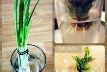 Gardening green thumb / by Chezna Saxe