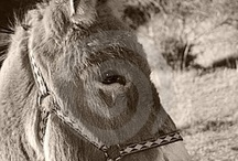 donkey / by Billy Innes