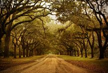 Country Road........take me home / by Carrie McDowell Hodge