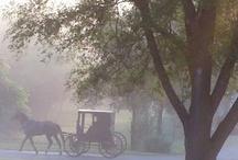 All things Amish / by Sabrina and Todd Farber