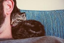 Cats - Stripes / by Wendy Nesbitt